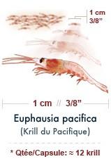 Krill pacifique