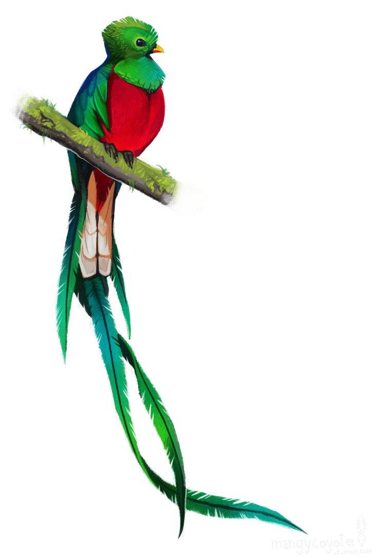 Resplendent Design From Katarzyna Kraszewska: Quetzal
