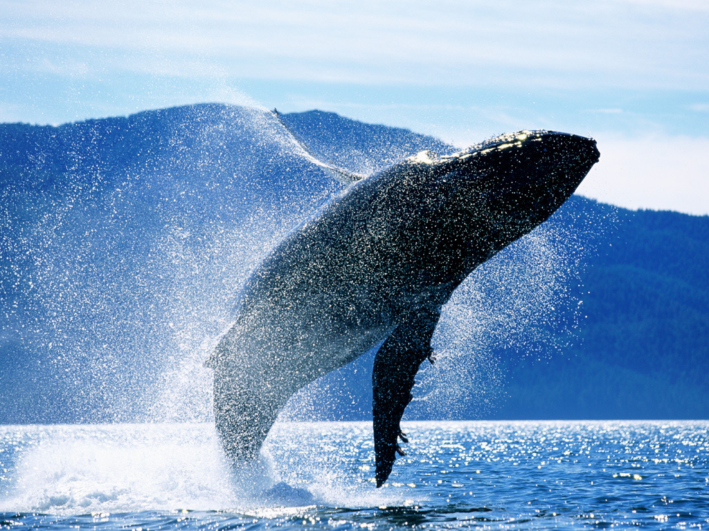 Baleine