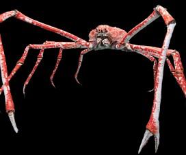 Crabe-araignée géant du Japon