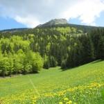 photo paysage nature